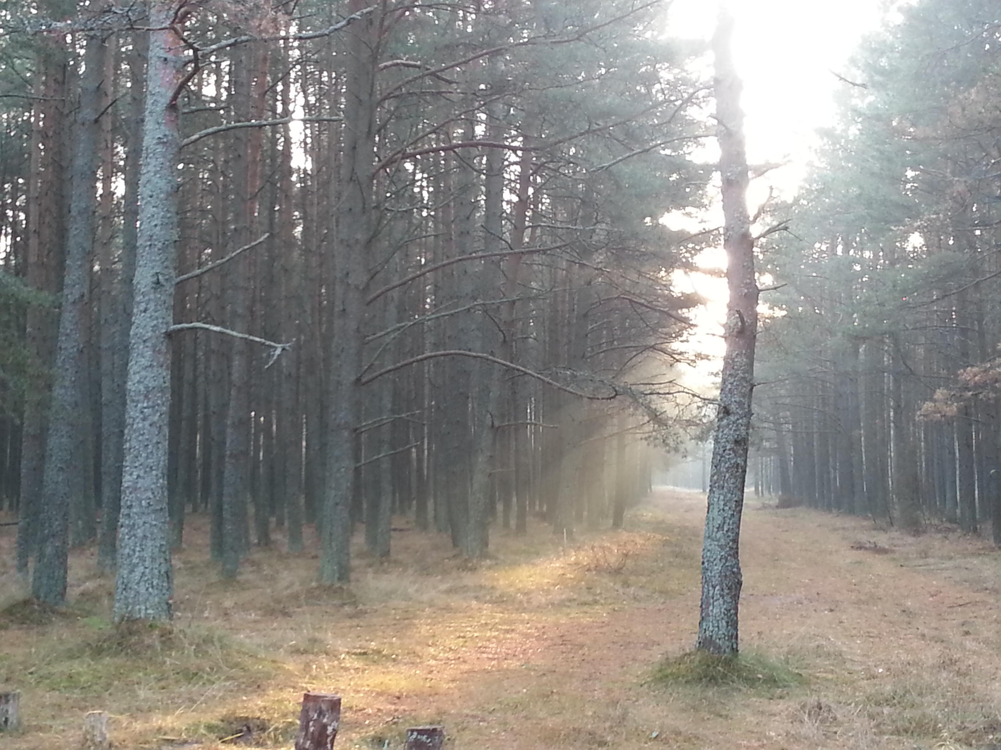 утренняя дымка в лесу