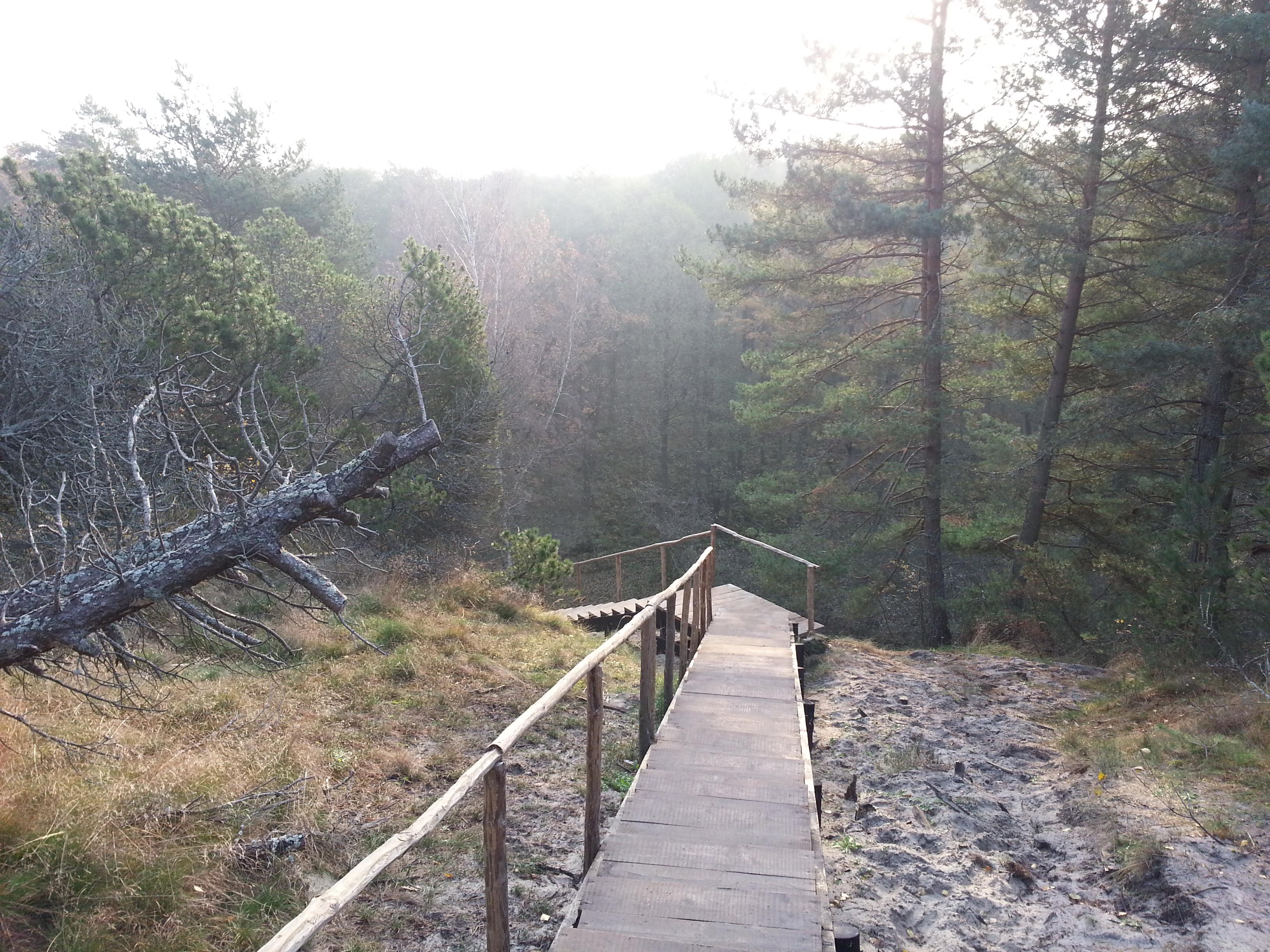 Поворот в лесную бездну